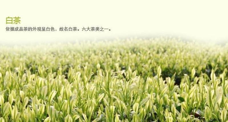绿雪芽加盟