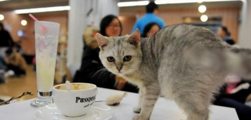 宠物咖啡店加盟