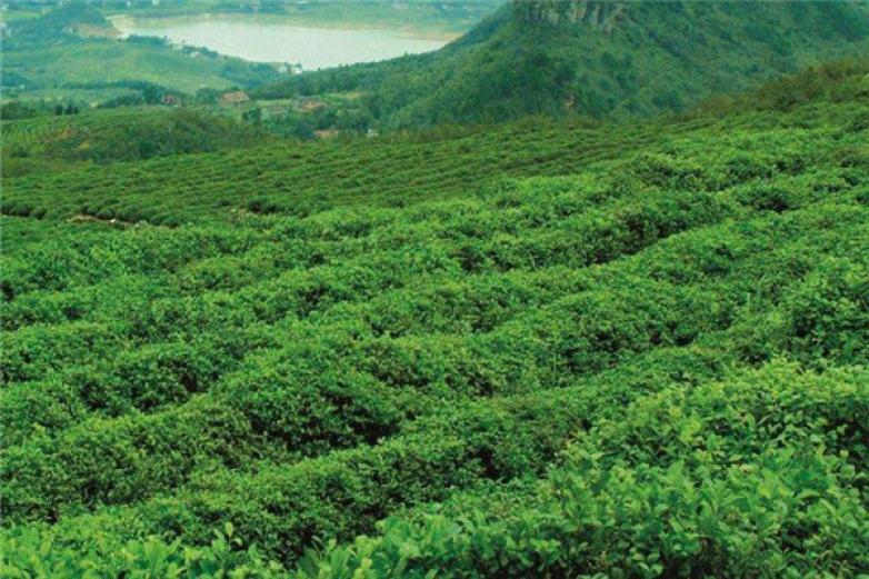 吴觉农茶叶加盟