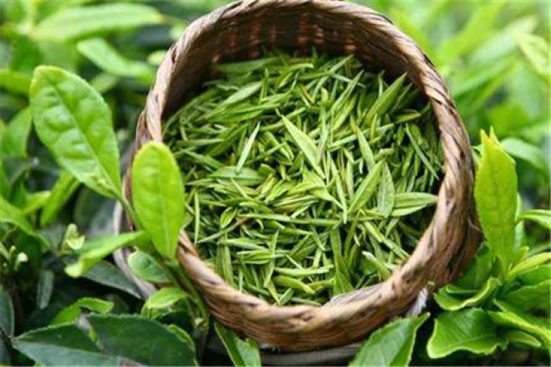 午子绿茶加盟