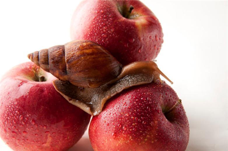 蜗牛水果加盟