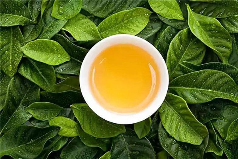 中茶世界茶园加盟