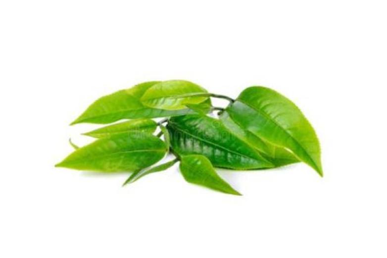 鼎元茶业加盟