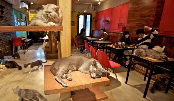 猫咪咖啡馆加盟好不好