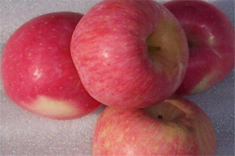 紅富士蘋果加盟