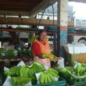 大洋進口厄瓜多爾香蕉
