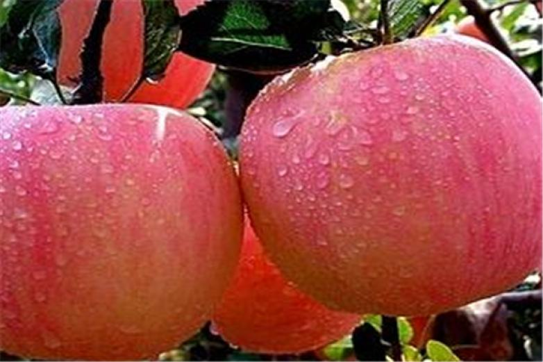 北方水果加盟