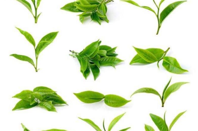 觀景茶葉加盟