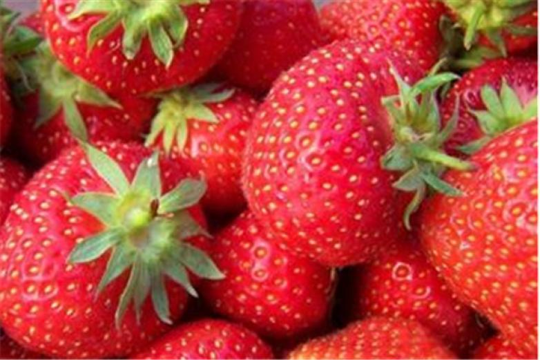 石埠子草莓加盟