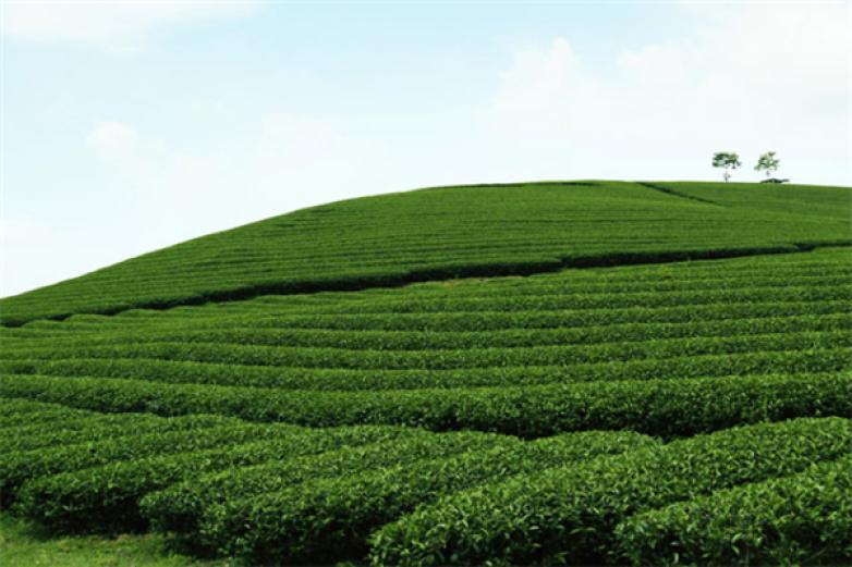 天饮茶叶加盟