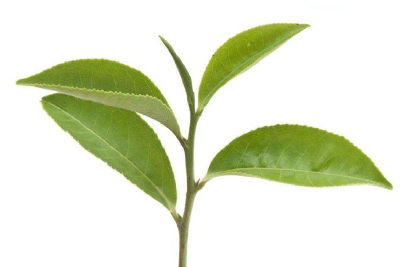 一农茶叶加盟