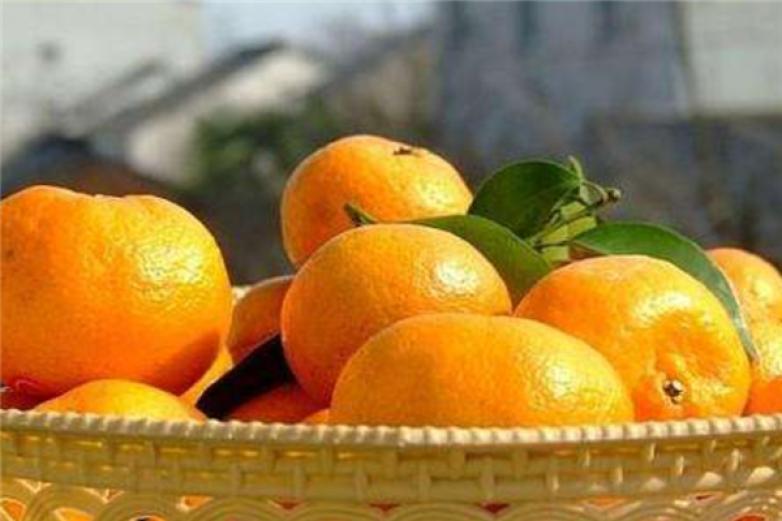 宜昌蜜橘加盟