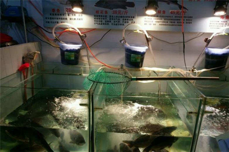 一品石锅鱼加盟